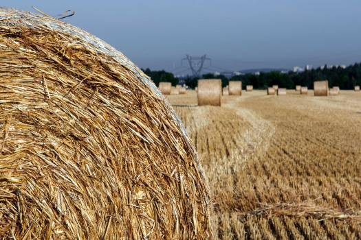 Straw On The Field - free stock photo #400159