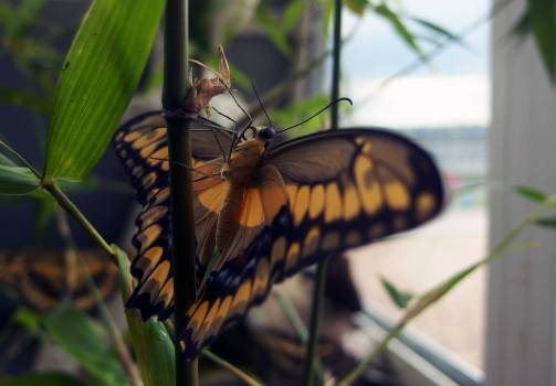 Butterfly Detail - free stock photo #400294