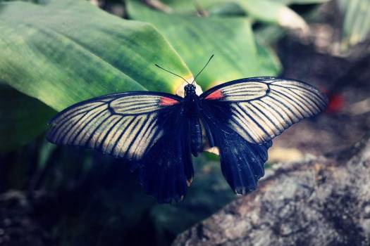 Butterfly - free stock photo #400295