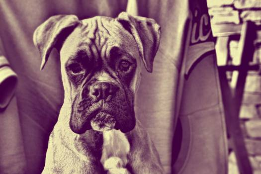 Sad Puppy - free stock photo #400322