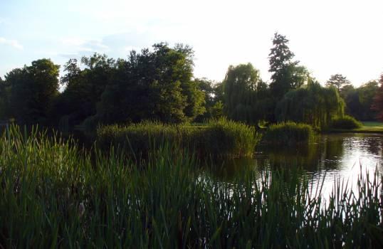 Reed and Lake - free stock photo Free Photo