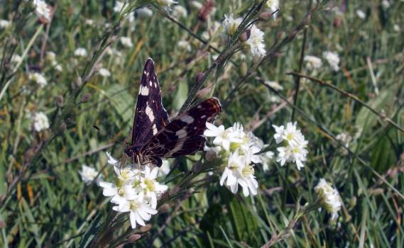 Butterfly - free stock photo #400550