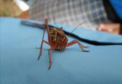 Grasshopper - free stock photo #400594