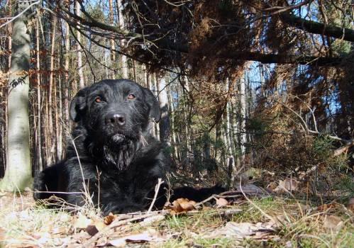 Lying Black Dog - free stock photo #400626