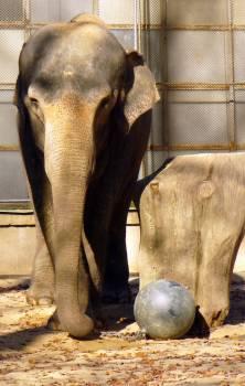 Elephant in ZOO - free stock photo #400694