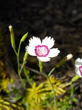 White Blossom - free stock photo #400706