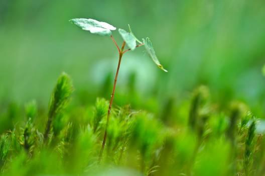 Green Leaf Plant Beside Green Leaf Free Photo