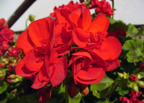 Red flower - free stock photo #400754