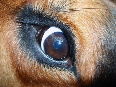Dog eye - free stock photo #400969