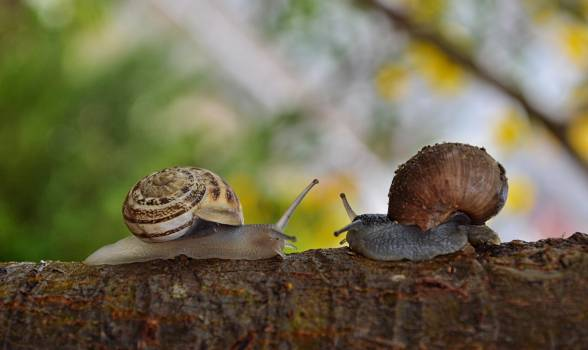 2 Snail Facing Each Other #40096