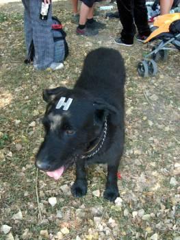 Black dog hologram - free stock photo #400970
