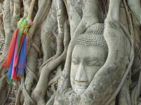 Buddha's Head In The Tree - free stock photo #401107
