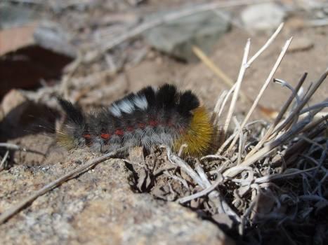 Caterpillar in mongolian steppe - free stock photo #401171