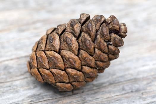 Pine Cone on Wood Free Photo #401190