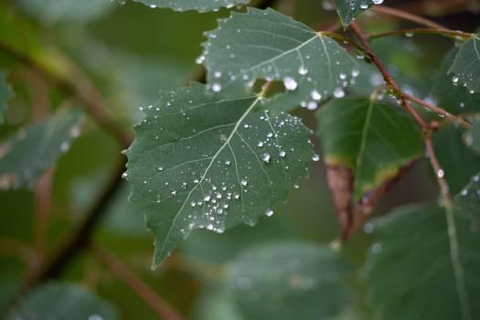 Raindrops on Leaves Free Photo #401286