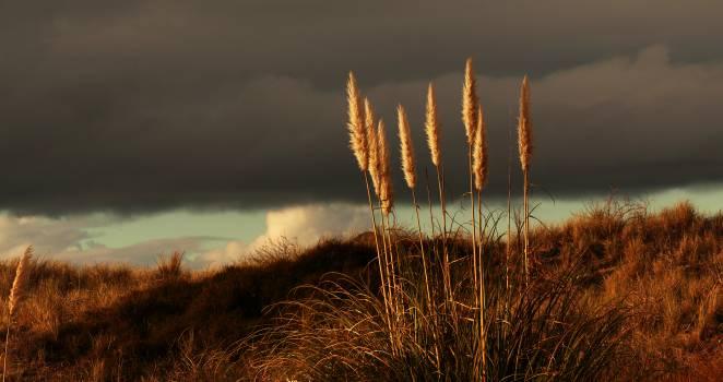 Prairie Grass Free Photo #401376
