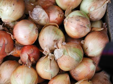 Onions Free Photo #401402