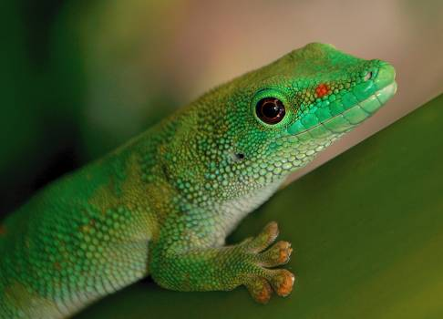 Green Gecko Free Photo #401464