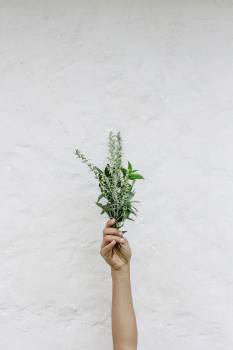Hand Holding Flowers Free Photo #401630