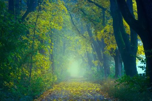 Enchanting Forest Walk Free Photo #401766