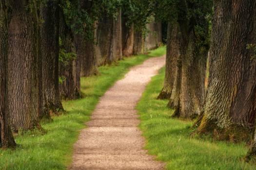 Park Walk Tree Free Photo #401825