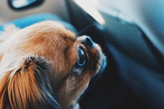 Animal Dog Pet Free Photo #401888