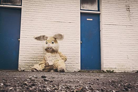 Bunny Rabbit Costume Halloween Free Photo #401931