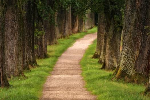 Park Walk Tree Free Photo #401960