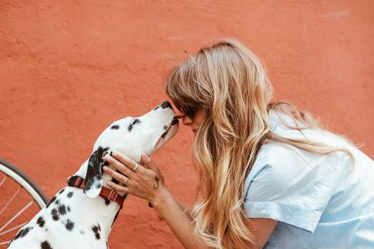 Dalmatian Dog Woman Free Photo #401986