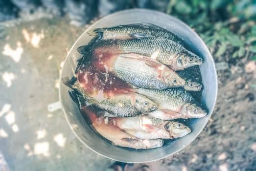 Food healthy water fish #40202