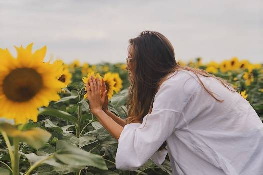 Woman Smelling Sunflowers Free Photo #402070