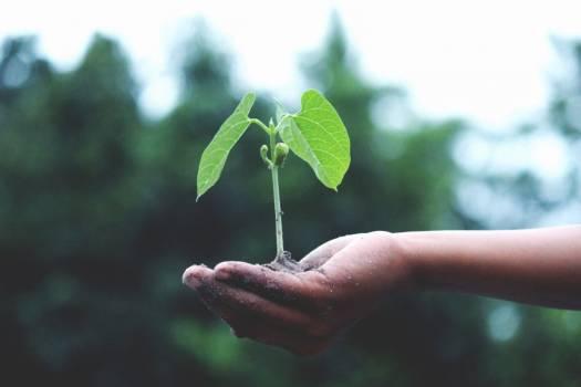 Plant Grow Hand Free Photo #402139