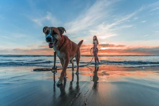 Woman Walking Dog Beach Sunrise Free Photo #402220