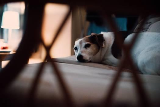 Small Dog Sleeping Free Photo #402301