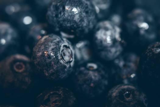 Blueberry Fruit Closeup Free Photo #402314