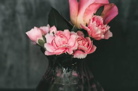 Beautiful Pink Flowers Free Photo #402316