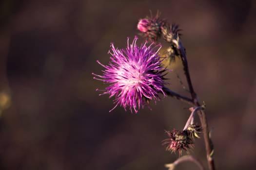 Purple Flower #40231