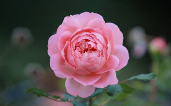 Beautiful Spring Flower Free Photo #402359