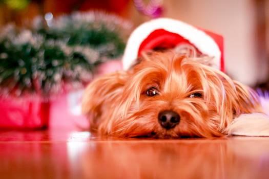 Holiday winter dog waiting #40235