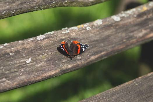 Butterfly Park Bench Free Photo #402550
