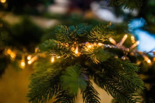 Christmas Tree Lights Free Photo #402736