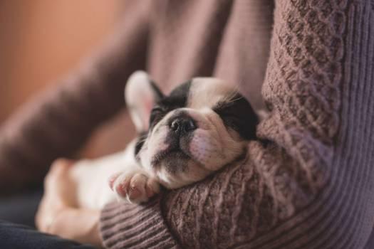 Dog Sleeping Free Photo #402829
