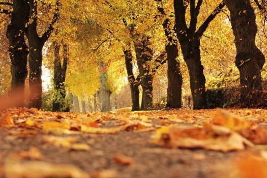 Forest Trees Leaves Autumn Fall Free Photo #402867