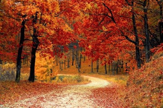 Autumn Fall Path Forest Free Photo #402882