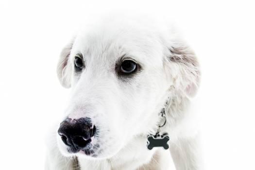 White Dog Minimal Free Photo #402893