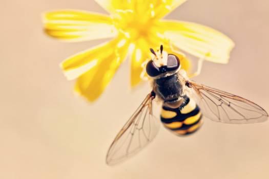 Yellow Bee Flower Free Photo #403059