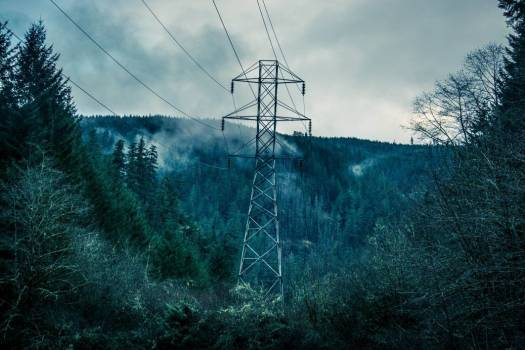 Power Lines Forest Trees Free Photo #403135