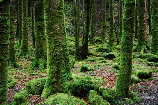 Photo of Trees Covered in Moss Free Photo