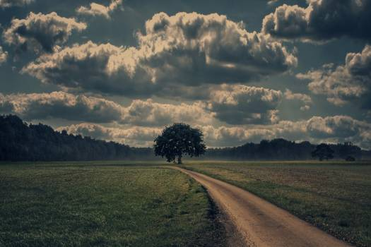 Storm Clouds Tree Free Photo #403154