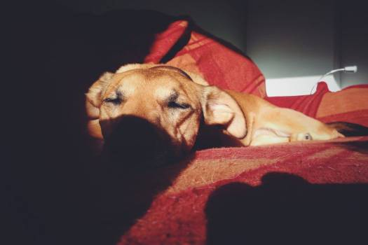 Puppy Dog Sleeping Shadow Free Photo #403260